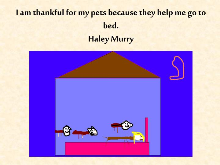 I am thankful for my pets because they help me go to bed.