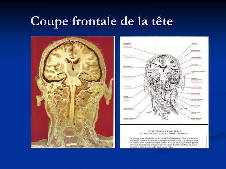 Coupe frontale de la tête