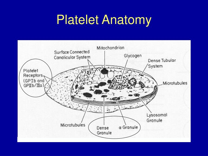 Platelet Anatomy
