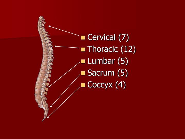 Cervical (7)