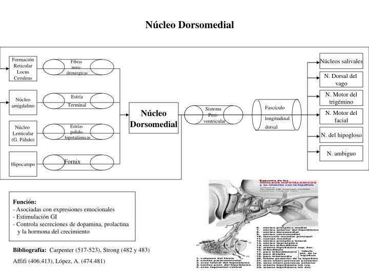 Núcleo Dorsomedial