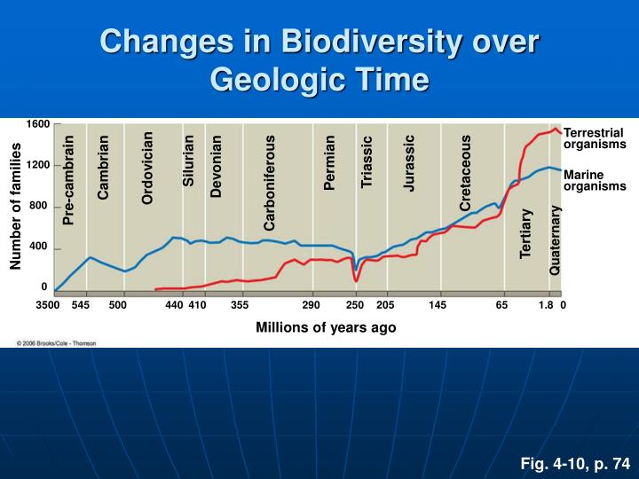 Changes in Biodiversity over Geologic Time
