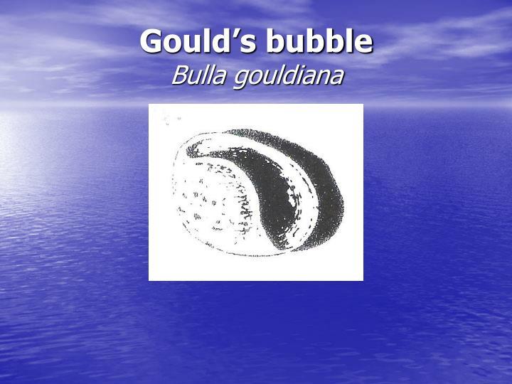 Gould's bubble