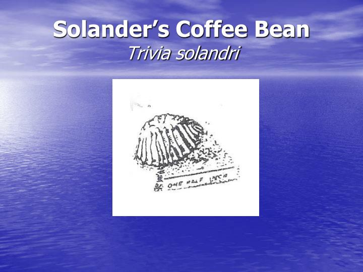 Solander's Coffee Bean