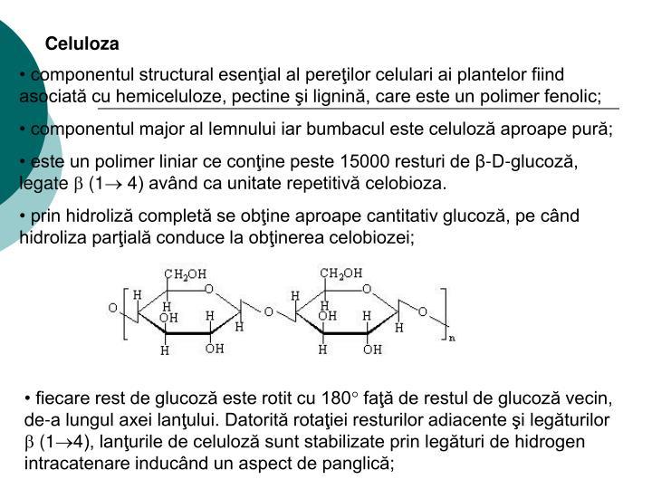 Celuloza