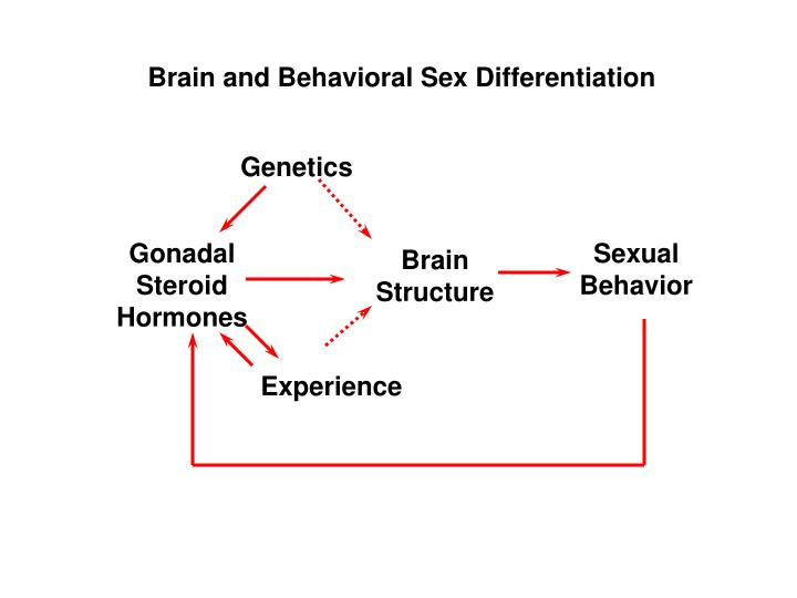 Brain and behavioral sex differentiation