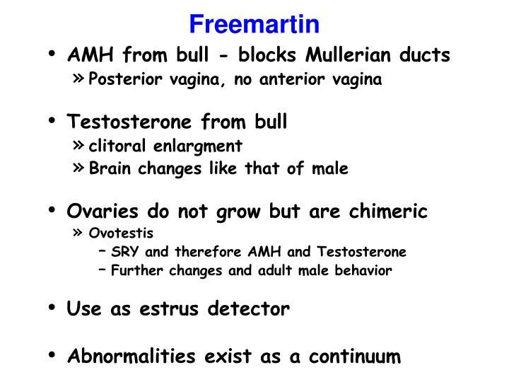 Freemartin