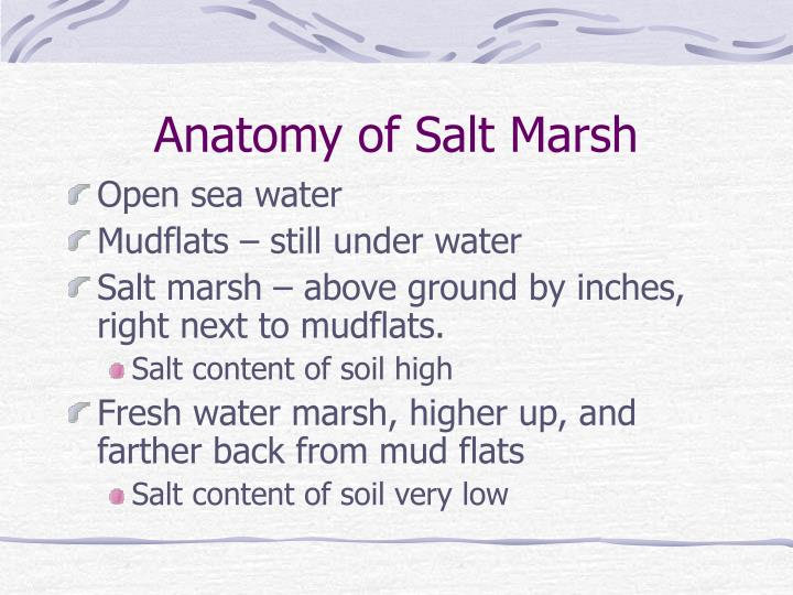 Anatomy of Salt Marsh