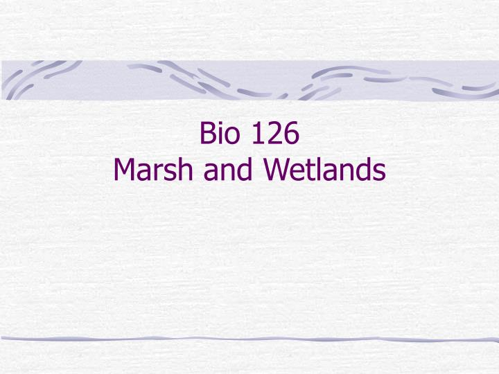 Bio 126 marsh and wetlands