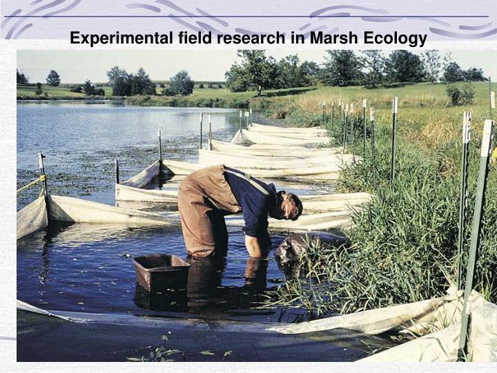 Experimental field research in Marsh Ecology