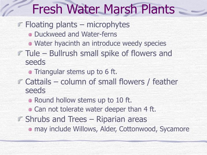 Fresh Water Marsh Plants