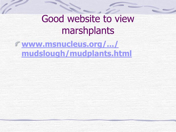 Good website to view marshplants