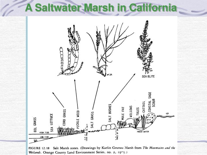 A Saltwater Marsh in California