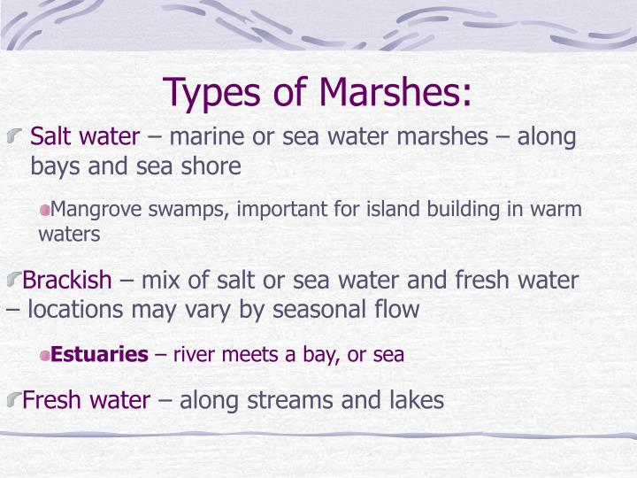 Types of marshes