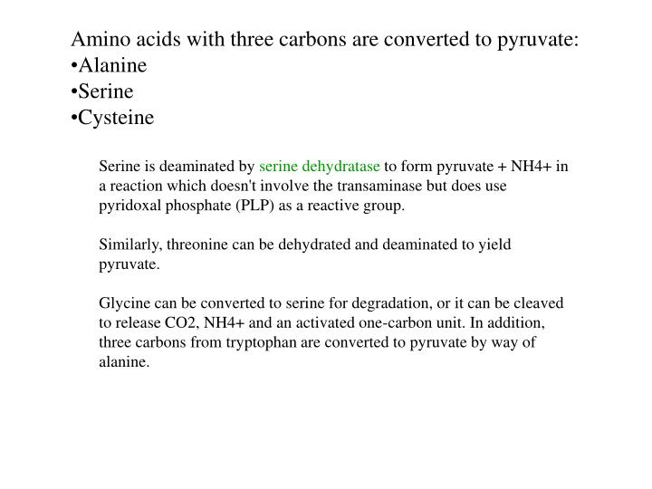 Amino acids with three carbons are converted to pyruvate: