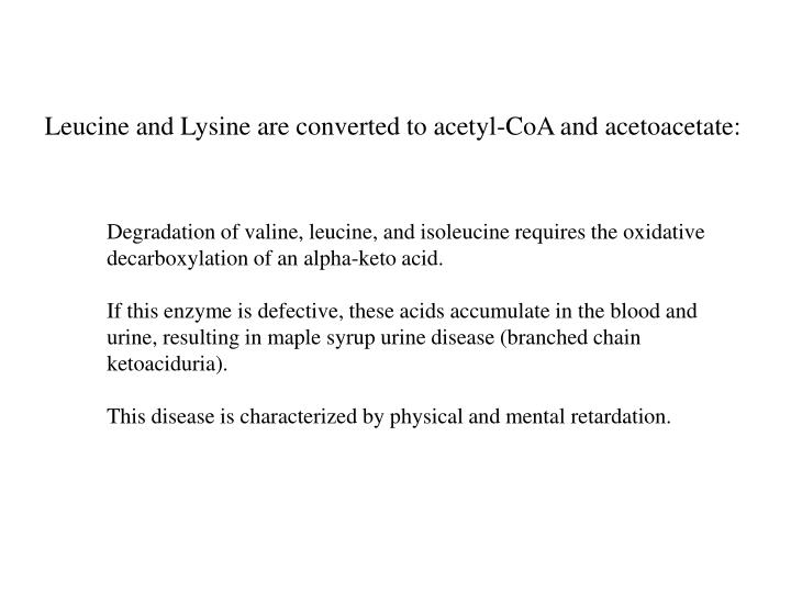 Leucine and Lysine are converted to acetyl-CoA and acetoacetate: