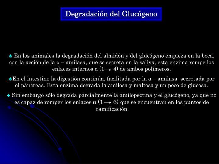 Degradación del Glucógeno