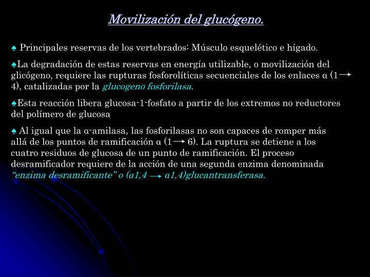 Movilización del glucógeno.