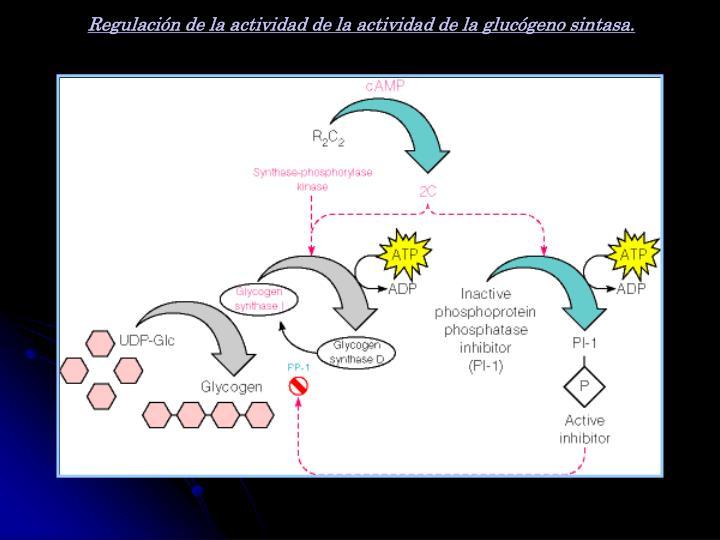 Regulación de la actividad de la actividad de la glucógeno sintasa.