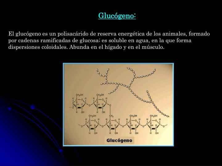 Glucógeno: