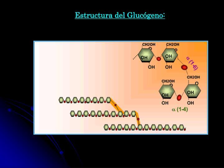 Estructura del Glucógeno: