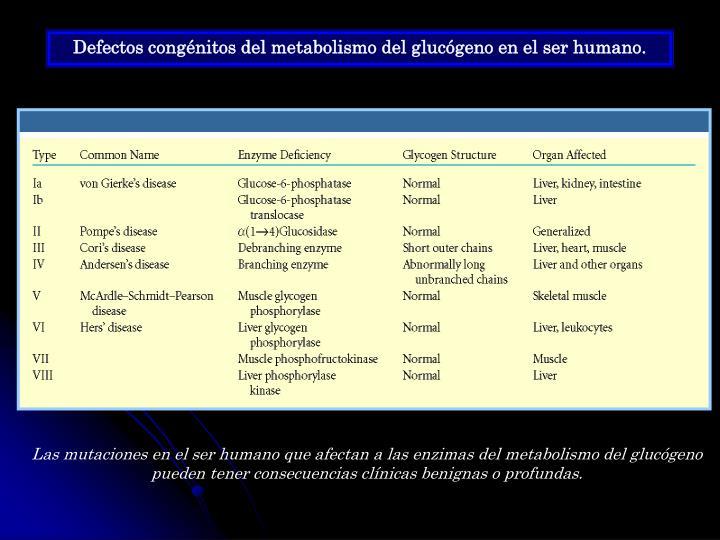 Defectos congénitos del metabolismo del glucógeno en el ser humano.