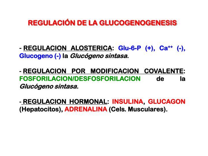 REGULACIÓN DE LA GLUCOGENOGENESIS