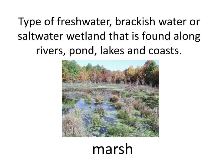 Type of freshwater, brackish water or saltwater wetland that is found along rivers, pond, lakes and coasts.