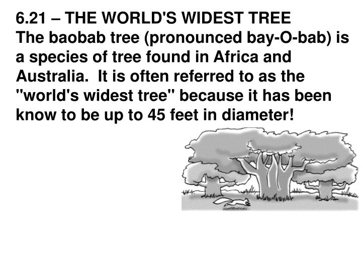 6.21 – THE WORLD'S WIDEST TREE