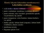 blanit labyrint labyrinthus membranaceus labyrinhtus cochlearis