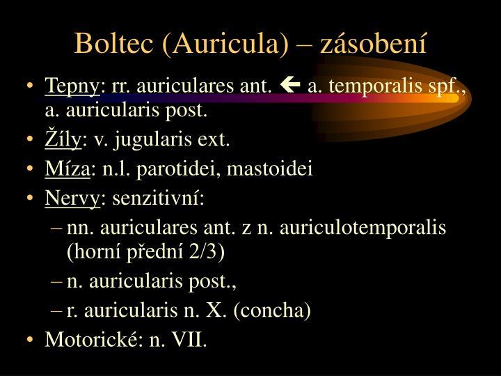 Boltec (Auricula) – zásobení