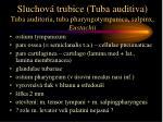 sluchov trubice tuba auditiva tuba auditoria tuba pharyngotympanica salpinx eustachii