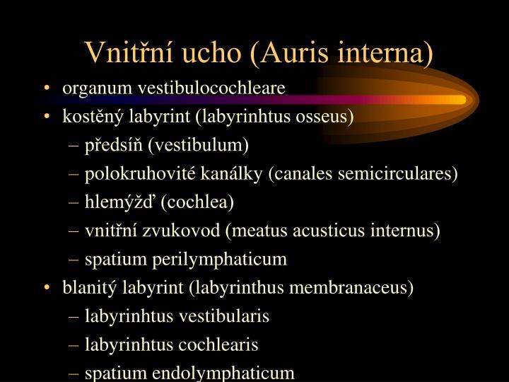 Vnitřní ucho (Auris interna)