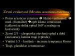 zevn zvukovod meatus acusticus externus