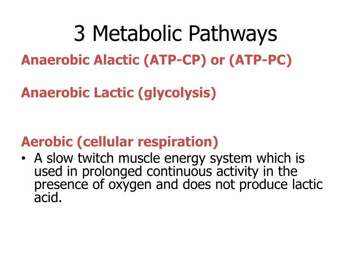 3 Metabolic Pathways