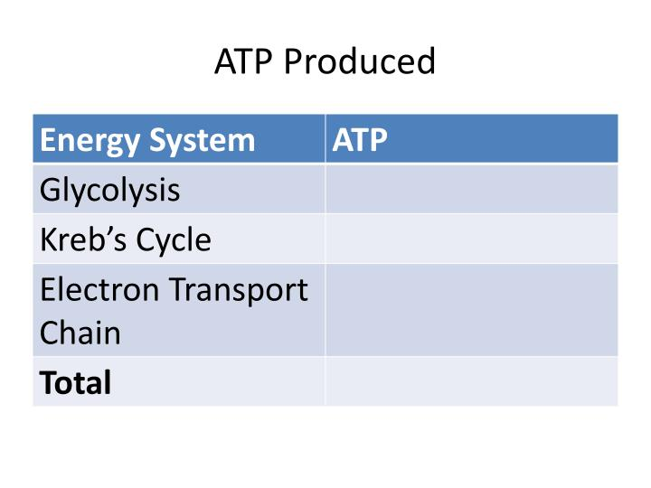 ATP Produced