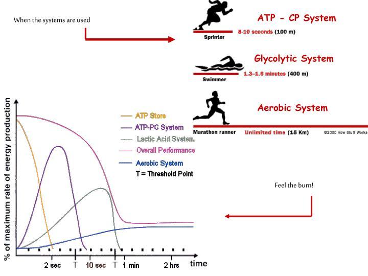 ATP - CP System