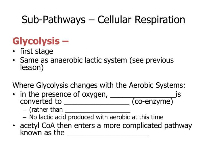 Sub-Pathways – Cellular Respiration