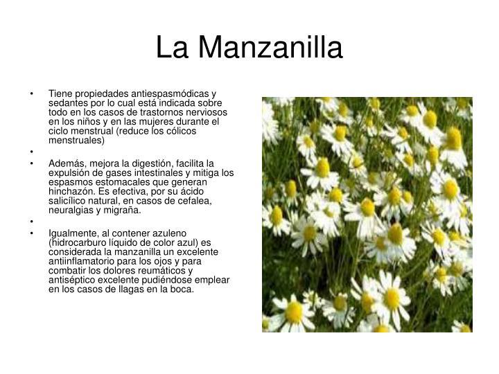 Ppt plantas medicinales y sus propiedades powerpoint for Manzanilla planta medicinal para que sirve