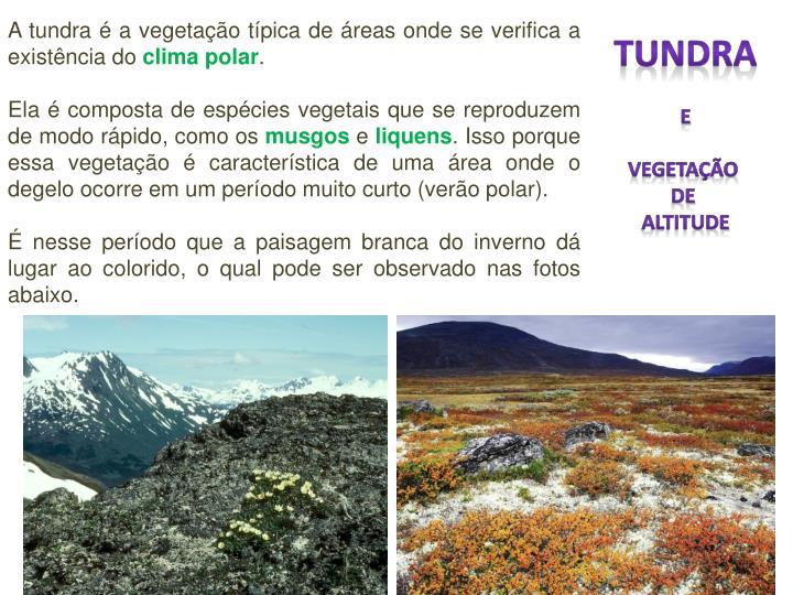 A tundra é a vegetação típica de áreas onde se verifica a existência do