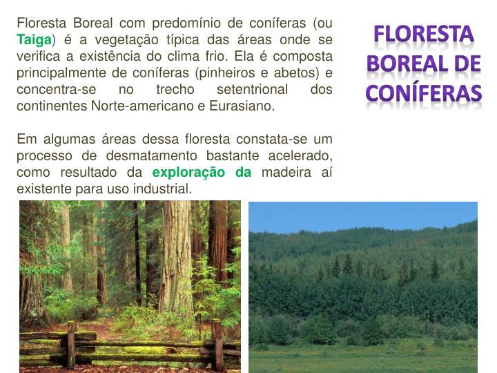 Floresta Boreal com predomínio de coníferas (ou