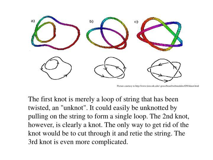 Picture courtesy to http://www.tiem.utk.edu/~gross/bioed/webmodules/DNAknot.html