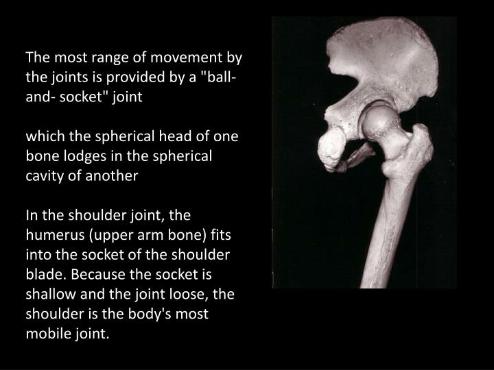 "The most range of movement by the joints is provided by a ""ball-and- socket"" joint"