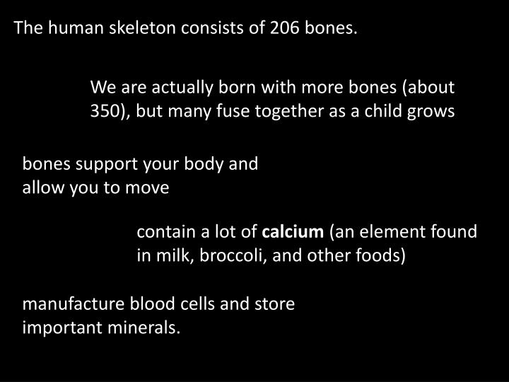 The human skeleton consists of 206 bones.