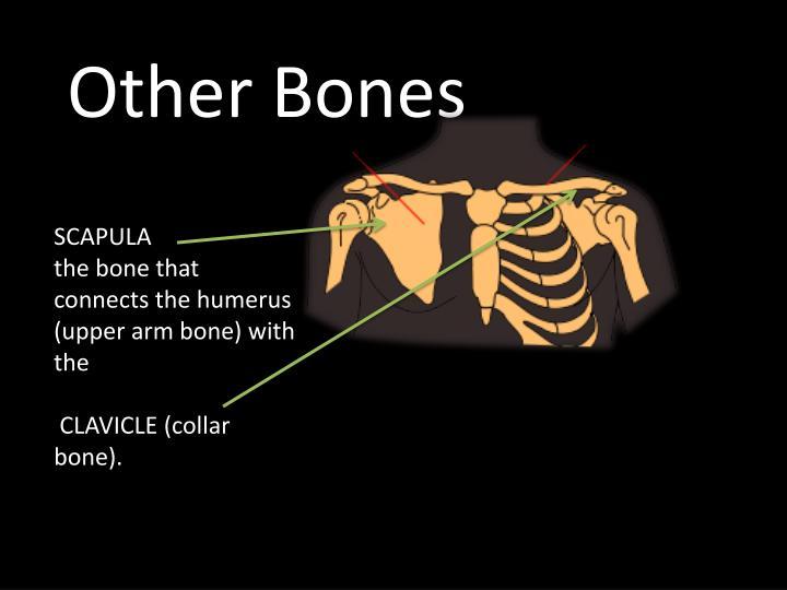 Other Bones