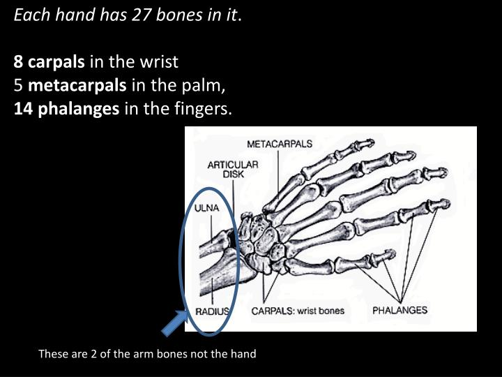 Each hand has 27 bones in it