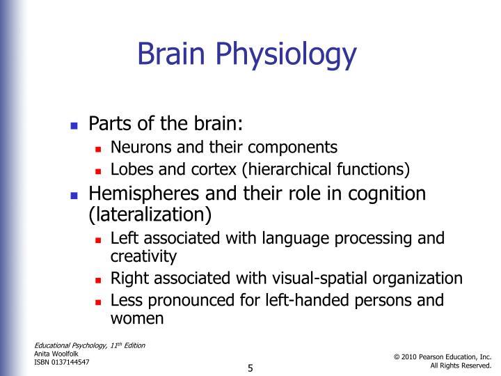 Brain Physiology