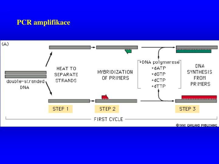 PCR amplifikace