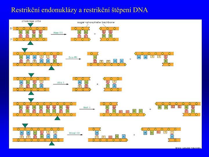 Restrikční endonuklázy a restrikční štěpení DNA