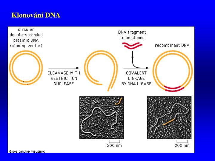Klonování DNA